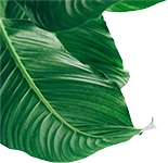Plante Deco 1
