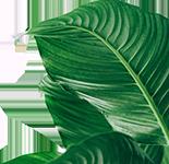 Plante Deco 2