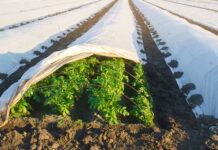 gel récolte