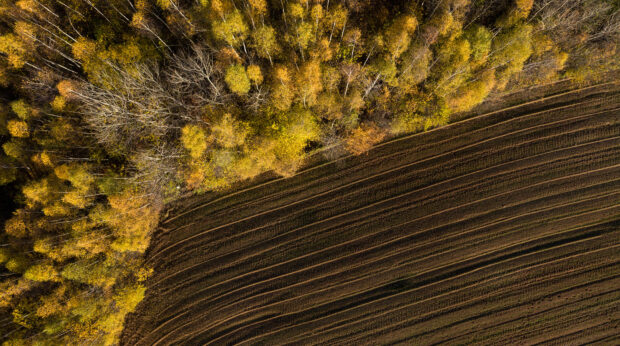 Biodiversité : Axa investit 1,5Md d'euros dans l'écosystème forestier
