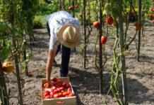 salarié agricole paysant