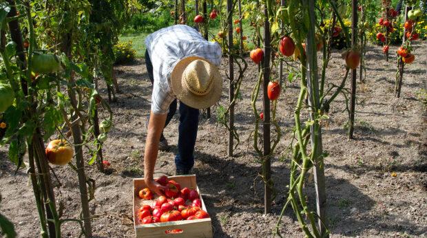 Agrica : 50% des entreprises agricoles ont souscrit un PER en points
